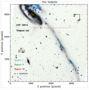 Image of the Tadpole galaxy          with overlaid ages